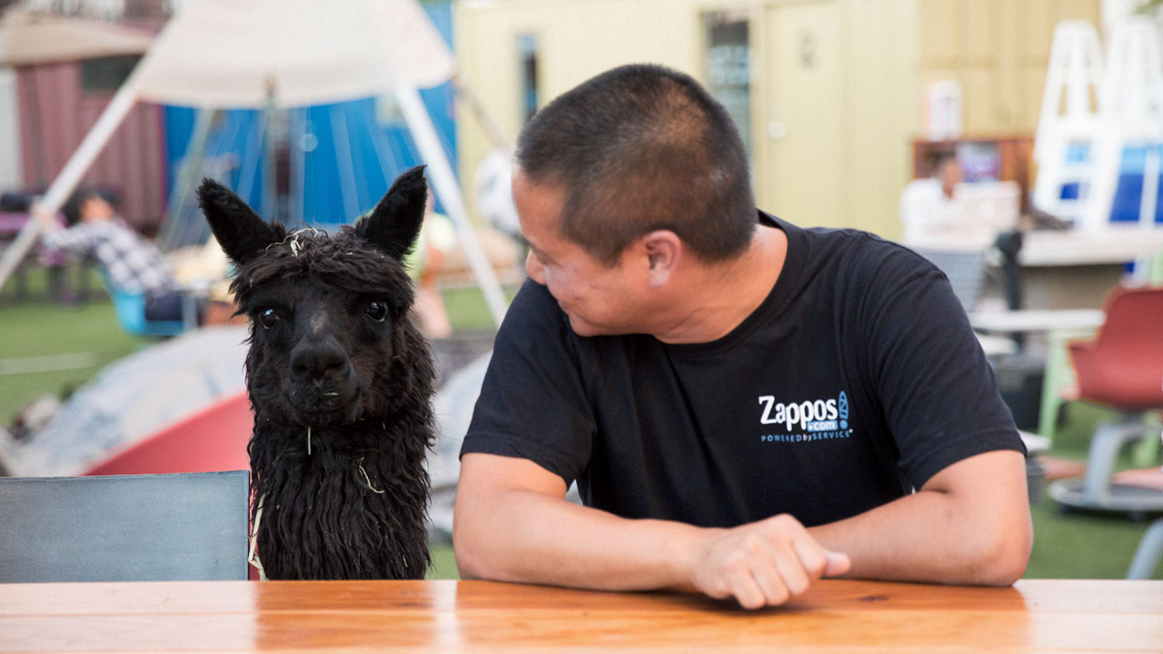 Alpaca and Tony Hsieh